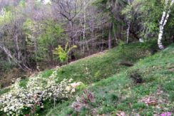 giardino inferiore_2800x1800